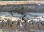 Desedai természet károsítás